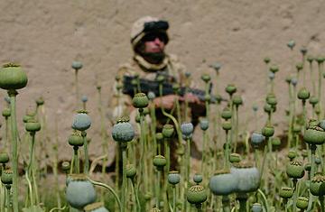afghan_opium04301