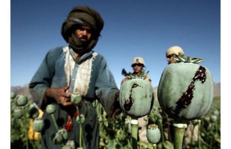 harvesting-opium_1396912i2